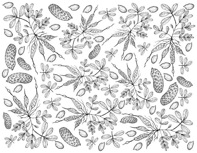 신선한 땅콩 식물 배경의 손으로 그린