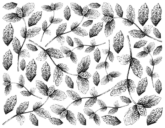 新鮮なペパーミントの葉の背景の手描き