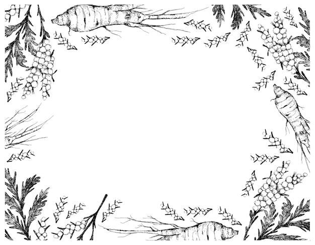 인삼과 쑥 식물 프레임의 손으로 그린