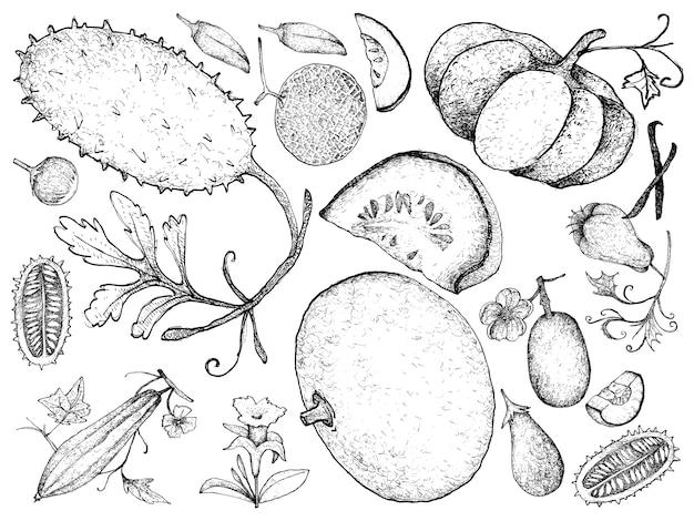 ひょうたんとスカッシュフルーツの手描き