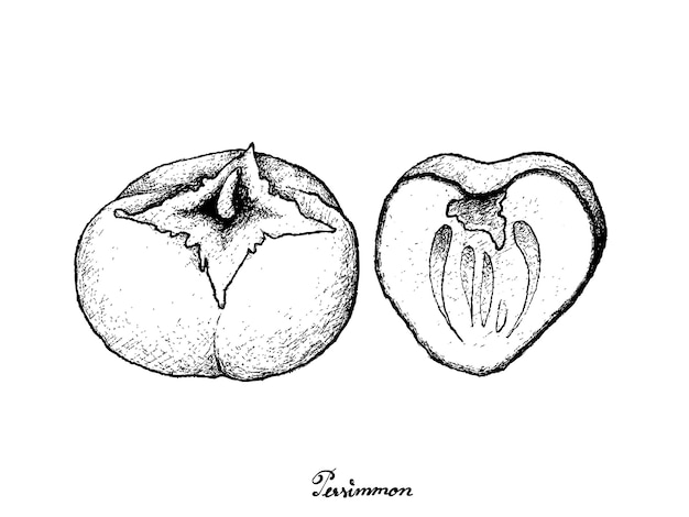 Kaki 또는 persimm의 손으로 그린