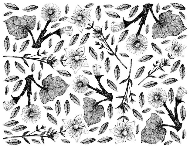 Perforate st. john 's wort 및 머위 식물의 손으로 그린