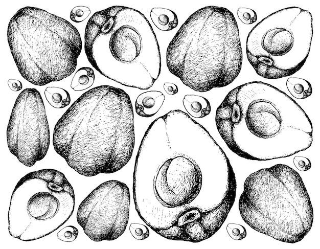 Рисованной иллюстрации померак или малайское яблоко