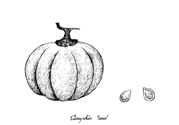 Рисованной тыквы с семенами на белом