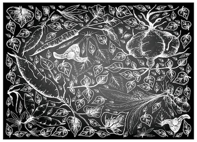 칠판에 뿌리와 덩이 야채의 손으로 그린