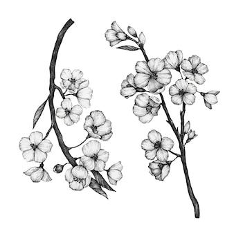사쿠라 꽃의 손으로 그린