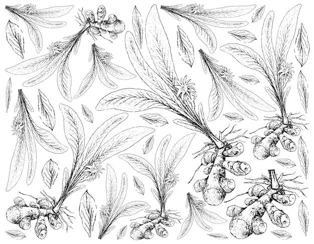 흰색 바탕에 심황 식물의 손으로 그린