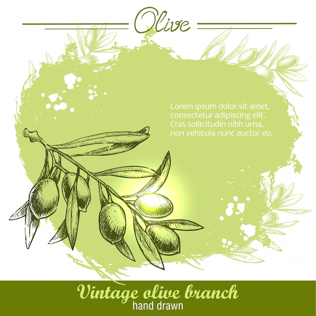 Hand drawn olive branch illustration on watercolor