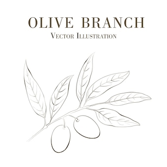Hand drawn olive branch.