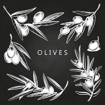 Hand drawn olive branches on chalkboard