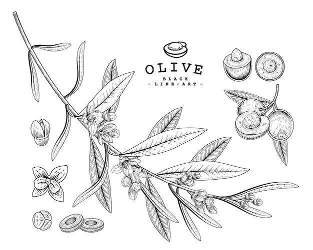 Hand drawn olive decorative set black line art isolated on white backgrounds.
