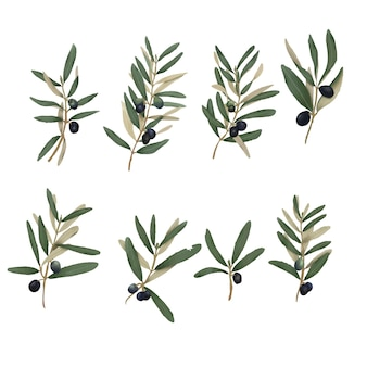 Hand drawn olive leaf elements