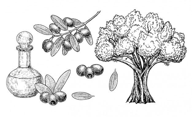 손으로 그린 올리브 세트. 빈티지 올리브 세트 흰색 절연입니다. 손으로 그린 나무, 잎과 검은 과일 가지와 조각 스타일의 기름 병의 삽화. 식물과 투수로 스케치하십시오.