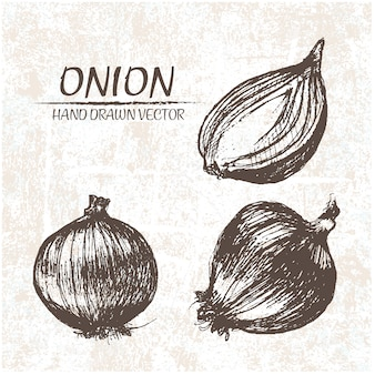 Hand drawn onion design