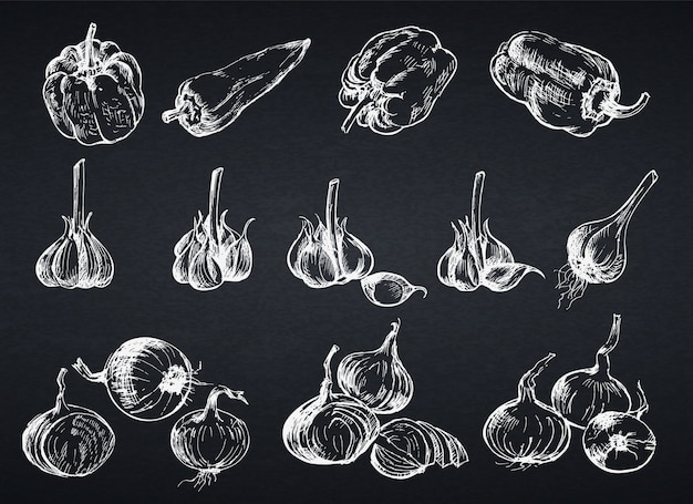 Hand drawn onion, pepper and garlic. illustration in sketch style for farm product. chalkboard style.