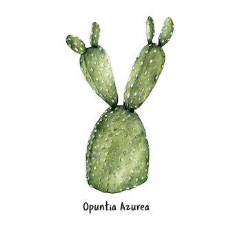 Hand drawn opuntia azurea purple prickly pear
