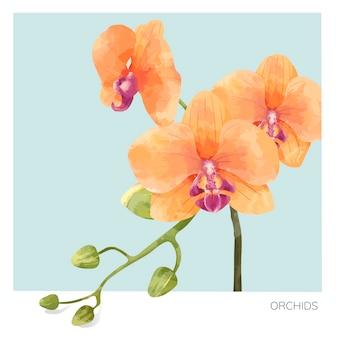 手描きの蘭の花のイラスト