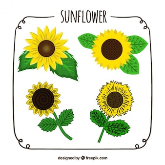 Hand-drawn pack of four sunflowers with different designs