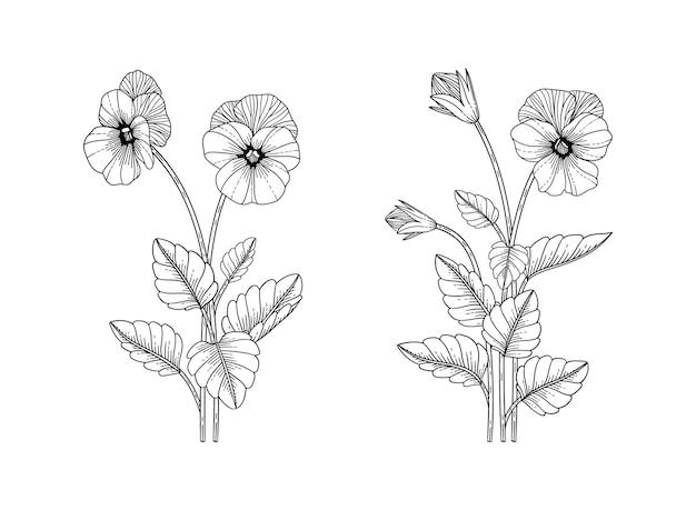 Нарисованная рукой цветочная иллюстрация анютиных глазок с линией искусства