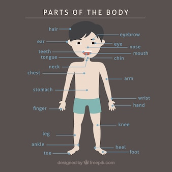 Hand drawn parts of the body