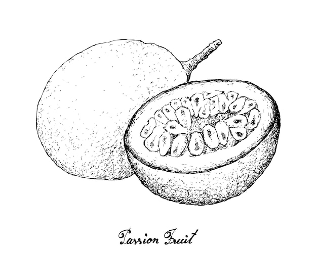 Hand drawn of passion fruit