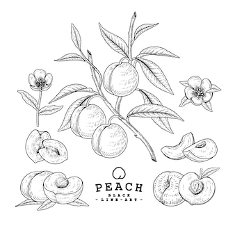 Hand drawn peach decorative set black line art retro style isolated on white backgrounds.