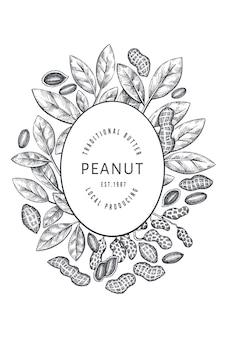 Ручной обращается арахисовая ветвь и шаблон дизайна ядер. гравировка в стиле ботанического рисунка.