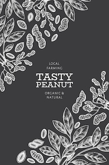 Hand drawn peanut branch and kernels banner template