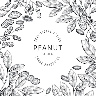 Hand drawn peanut branch and kernels design template. organic food illustration on white background. retro nut background. engraved style botanical picture.