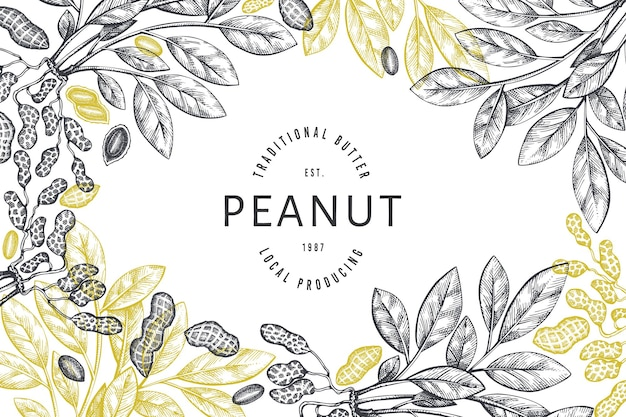 Hand drawn peanut branch and kernels design template.