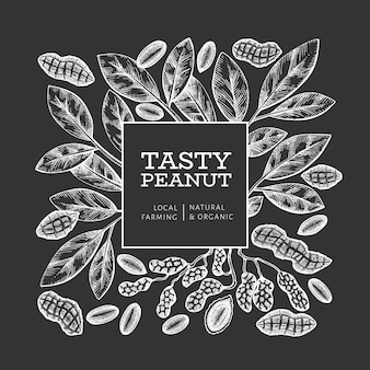 Hand drawn peanut branch and kernels  template. organic food  illustration on chalk board. retro nut illustration. engraved style botanical picture.