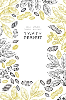 Hand drawn peanut branch and kernels  template. organic food  illustration on white background. retro nut background. engraved style botanical picture.