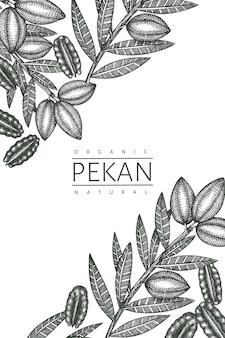 손으로 그린 된 피칸 지점과 커널 디자인 서식 파일. 흰색 바탕에 유기농 식품 그림입니다. 레트로 너트 그림입니다. 새겨진 스타일의 식물 사진.