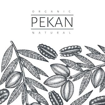 손으로 그린 된 피칸 지점과 커널 디자인 서식 파일. 흰색 바탕에 유기농 식품 벡터 일러스트입니다. 레트로 너트 그림입니다. 새겨진 스타일의 식물 사진.