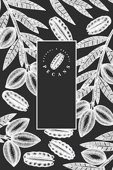 손으로 그린 피칸 지점 및 커널. 유기농 식품 벡터 일러스트 분필 보드에 고립입니다. 레트로 너트 그림입니다. 새겨진 스타일 식물 사진.