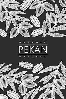 손으로 그린 된 피칸 지점 및 커널 템플릿입니다. 분필 보드에 고립 된 유기농 식품 그림입니다. 새겨진 스타일의 식물 사진.