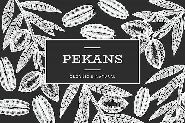 손으로 그린 피칸 지점 및 커널 템플릿입니다. 초 크 보드에 유기농 식품 그림입니다. 레트로 너트 그림입니다.