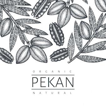 손으로 그린 된 피칸 지점 및 커널 템플릿입니다. 흰색 바탕에 유기농 식품 그림입니다. 빈티지 너트 그림입니다. 새겨진 스타일의 식물 사진.