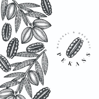 Hand drawn pecan branch and kernels design template. organic food illustration on white background. retro nut illustration. engraved style botanical picture.