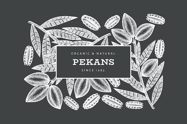 Hand drawn pecan branch and kernels label template.
