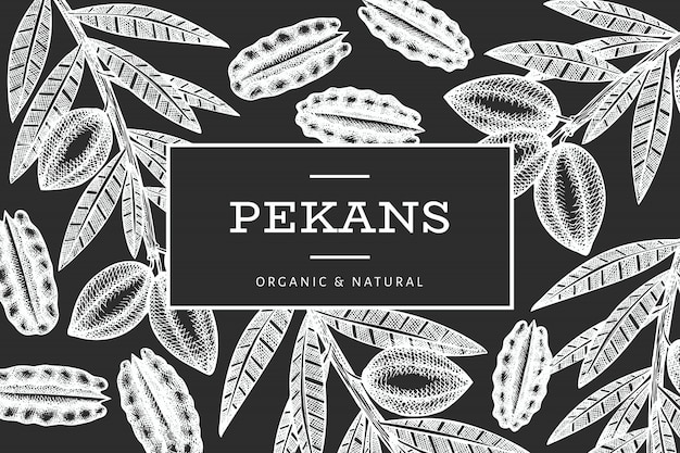 Hand drawn pecan branch and kernels  template. organic food  illustration  on chalk board. retro nut illustration.
