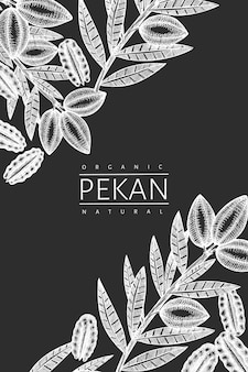 Hand drawn pecan branch and kernels  template. organic food  illustration isolated on chalk board. retro nut illustration.