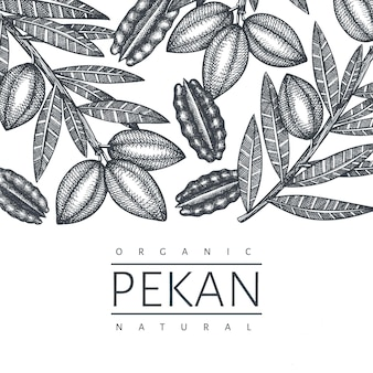 Hand drawn pecan branch and kernels  template. organic food  illustration on white background. vintage nut illustration. engraved style botanical picture.