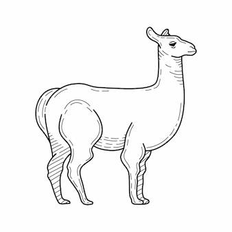 Hand drawn pencil illustration of llama. mountain animal. vector illustration.
