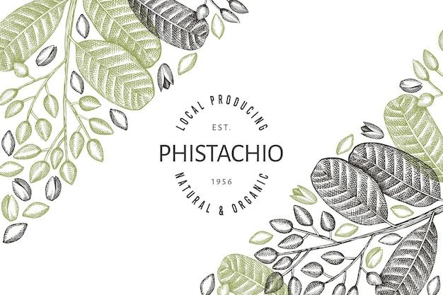 손으로 그린 피스타치오 가지와 커널 디자인 템플릿. 흰색 바탕에 유기농 식품 벡터 일러스트입니다. 레트로 너트 그림입니다. 새겨진된 스타일 식물 배너입니다.