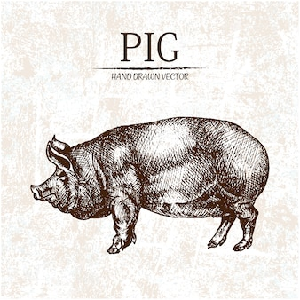 Hand drawn pig design