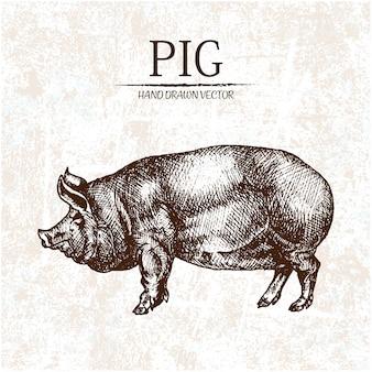 손으로 그린 돼지 디자인