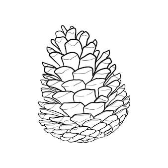 Hand drawn pine cone vector illustration