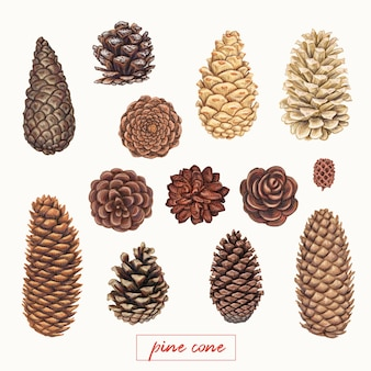 Hand drawn pine cones