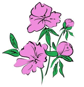 손으로 그린 핑크 꽃 모란